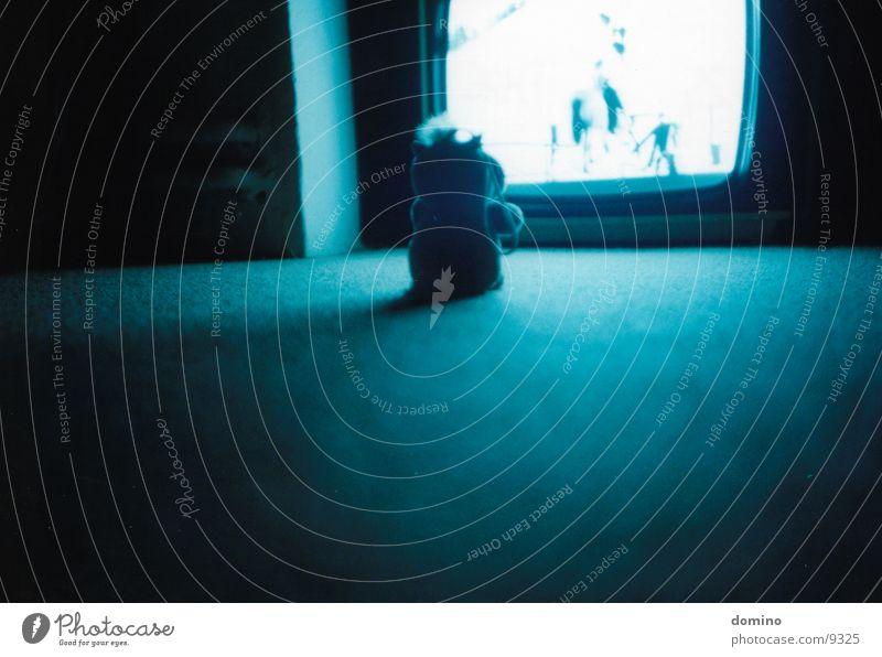 Neulich Nacht blau Lampe Stimmung Beleuchtung Fernsehen Bodenbelag Information Medien Publikum Teppich Video einzeln Monochrom Duplex