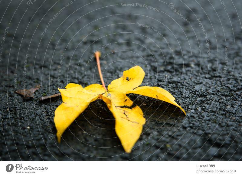 Laub auf Beton Blatt schwarz gelb Straße Herbst Beton Straßenbelag