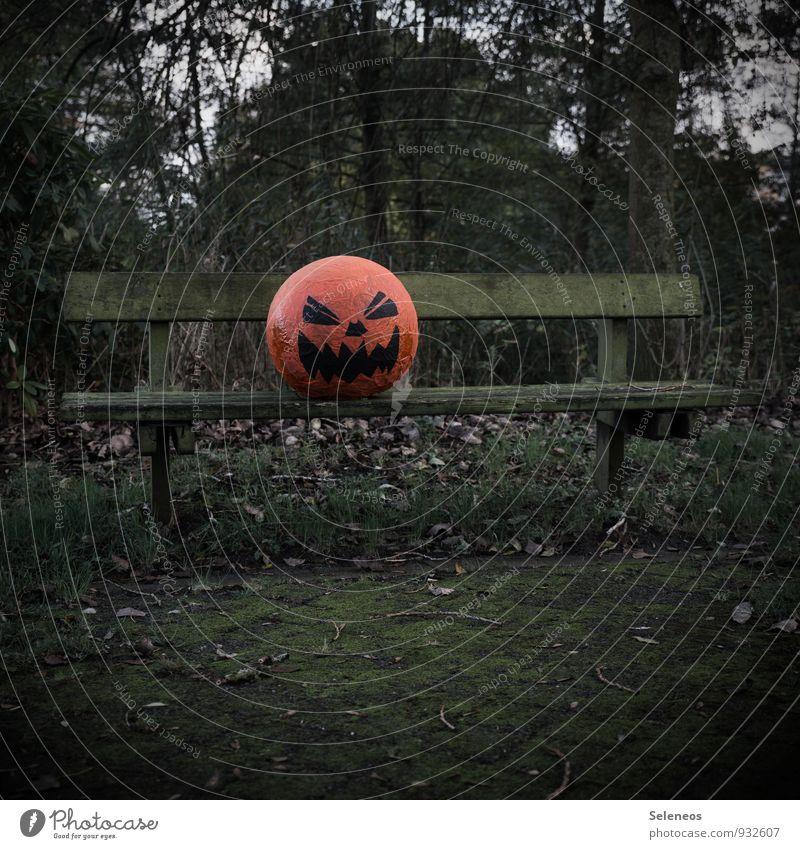 Happy Halloween Umwelt Natur Herbst Pflanze Baum Garten Park gruselig Angst Entsetzen Kürbis Kürbiskopf Bank Parkbank Moosteppich Farbfoto Außenaufnahme