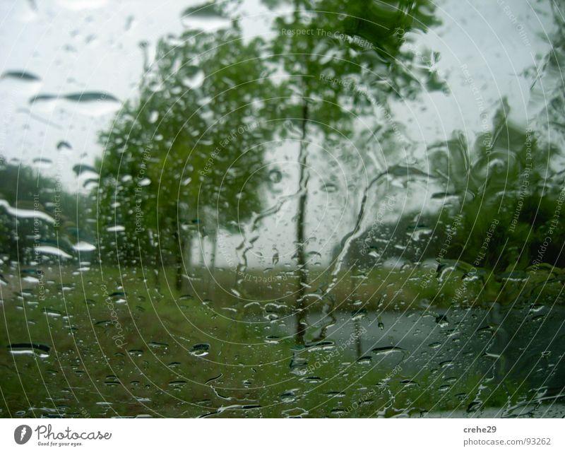 Duschwetter Natur Wasser Baum grün Pflanze Frühling Regen Wetter Wassertropfen Sturm Gewitter Erfrischung