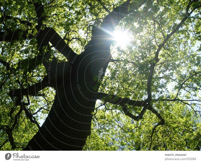 Lichtblick Natur Baum Sonne ruhig Erholung Frühling Glück Ausflug
