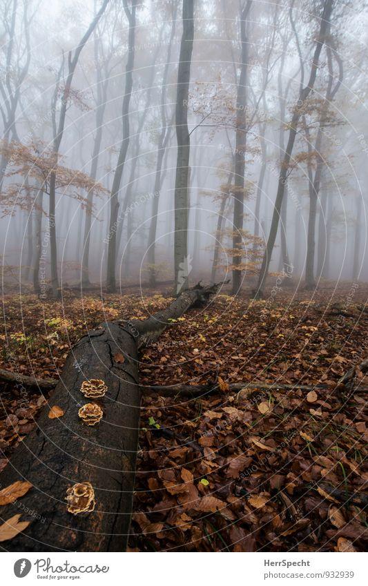 Liegen bleiben Umwelt Natur Landschaft Herbst schlechtes Wetter Nebel Baum Wald Wien Stadtrand alt ästhetisch außergewöhnlich gruselig natürlich braun grau