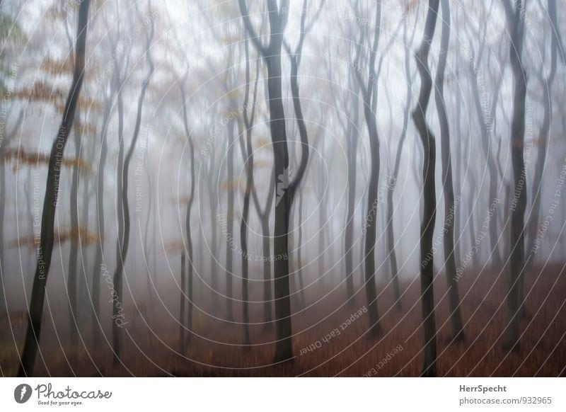 Novemberstimmung Umwelt Natur Landschaft Herbst schlechtes Wetter Nebel Baum Laubbaum Buche Buchenwald Wald Wien Wiener Wald Österreich Stadtrand dunkel