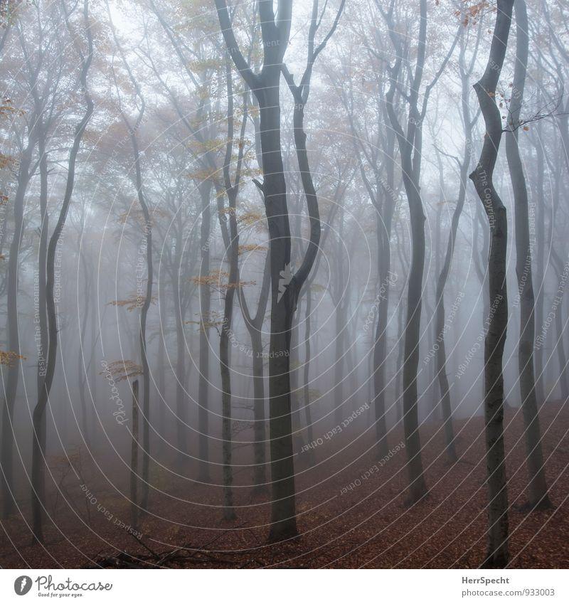 Nebelwald IV Natur Baum Landschaft dunkel Wald Herbst natürlich grau braun Nebel ästhetisch gruselig Herbstlaub herbstlich Österreich November