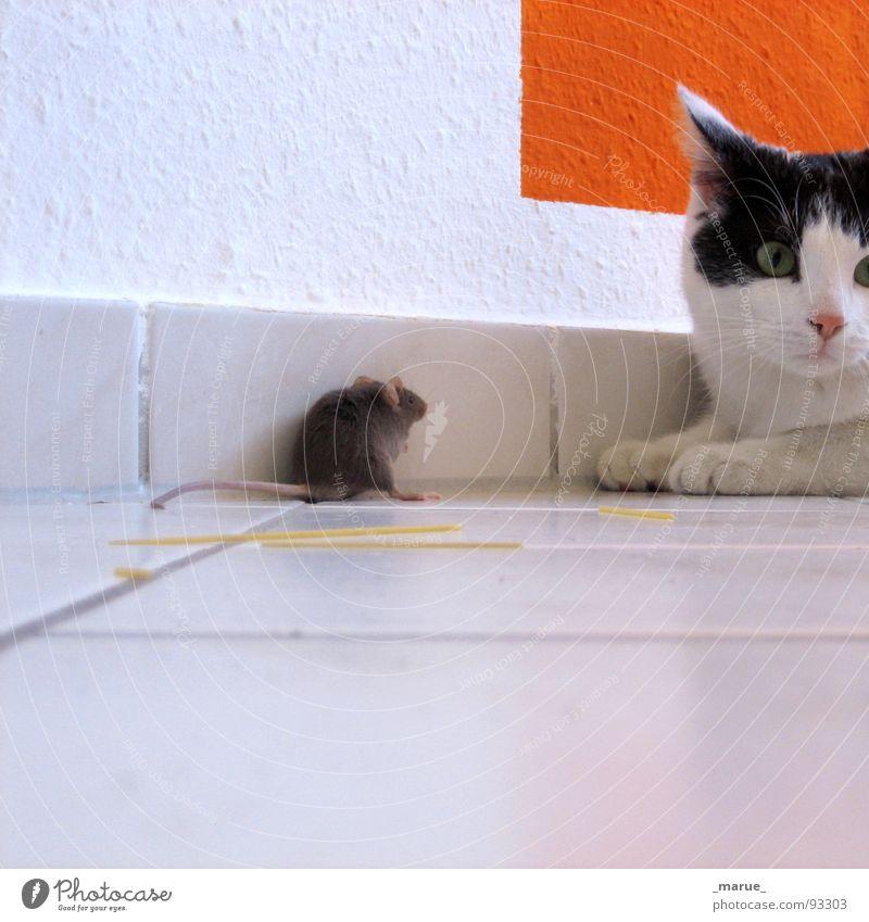 Spieltrieb?! Katze Langeweile Käse Futter Tom Tom Säugetier Maus Jagd jerry
