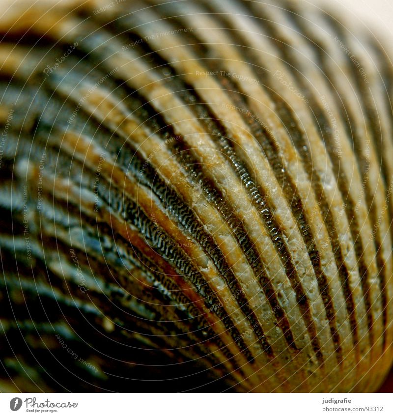 Muschel Natur blau Ferien & Urlaub & Reisen Sommer Meer Strand Einsamkeit Haus Tod Umwelt grau Linie Feste & Feiern Ordnung Fisch leer
