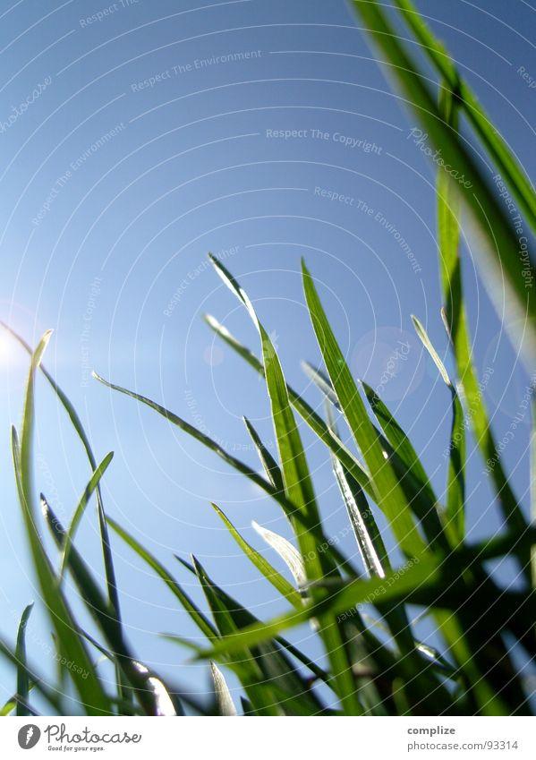 Wunschgras Gras Makroaufnahme Blende Sonnenstrahlen himmelblau Halm Wiese Reflexion & Spiegelung grün Froschperspektive Pflanze Wachstum Reifezeit Sommer rein