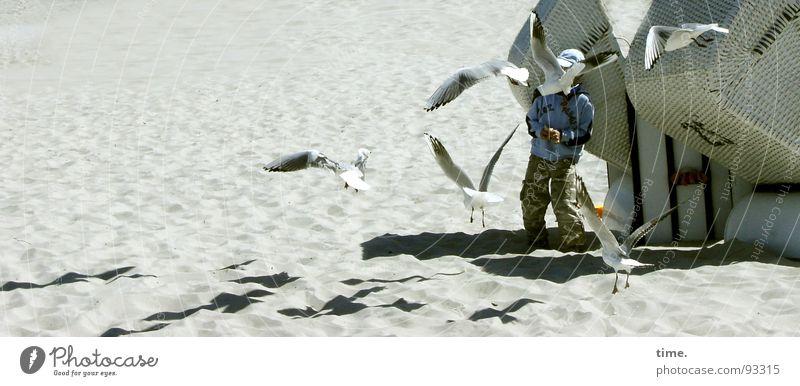 Möwenauflauf Strand Junge Sand Küste Kommunizieren beobachten Strandkorb füttern Angeben Flugschau zusammenrotten