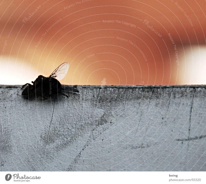 nochmal zwei, die sich zum fressen gern haben Fliege Insekt Spinne Kuscheln saugen Flügel fangen Marsianer spinnen Spinnennetz Schädlinge Nahrungskette