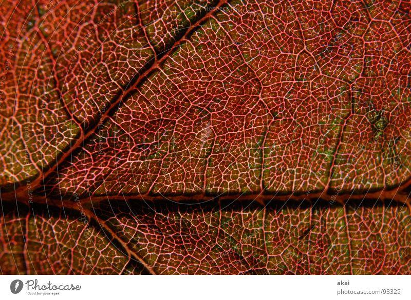 Das Blatt 12 Pflanze grün Botanik Pflanzenteile Kletterpflanzen pflanzlich Umwelt Sträucher Gegenlicht Hintergrundbild Baum nah Photosynthese reif Gefäße
