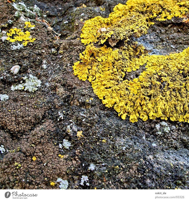 Die Körperfresser kommen Mauer gelb Fressen aufsaugen krabbeln Wachstum verfallen Angst Panik Makroaufnahme Nahaufnahme körperfresser Außerirdischer