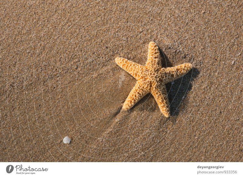 Seesterne in die Wellen Erholung Ferien & Urlaub & Reisen Tourismus Sommer Strand Meer Insel Natur Landschaft Sand Küste natürlich weiß Wasser Stern tropisch