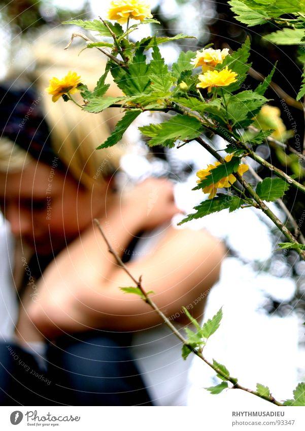 Sophie2 Frau Natur Blume grün Sommer gelb Blüte Zweig