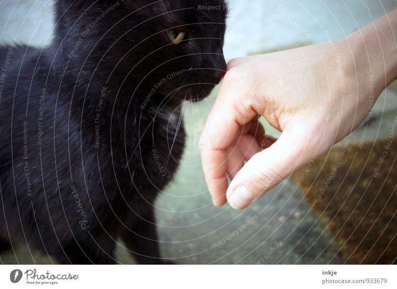 """""""Zähmen, das ist eine in Vergessenheit geratene Sache"""" Katze Hand ruhig Tier Gefühle Freundschaft Zusammensein Kommunizieren Neugier Vertrauen Geruch Haustier"""