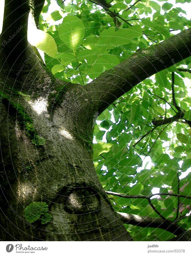 Big Brother is watching you! grün Baum Pflanze Sonne Sommer Blatt Auge Wald Frühling Wärme braun gefährlich Physik Ast beobachten Baumstamm