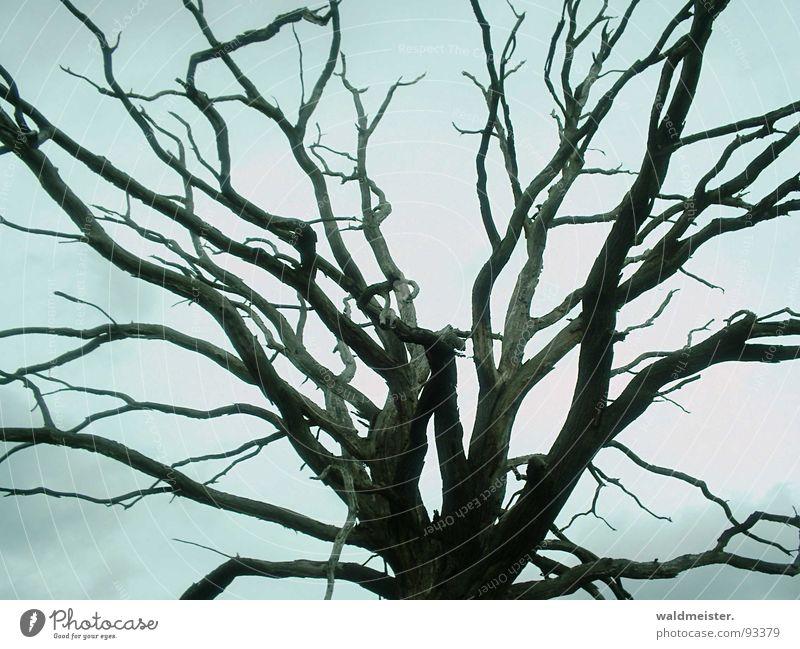 toter Baum alt Baum Tod Holz Trauer Ast mystisch