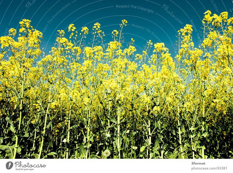 noch_mal_raps Himmel Natur blau Ferien & Urlaub & Reisen grün Pflanze Blume Ferne Landschaft gelb Straße Wiese Frühling Freiheit Wege & Pfade Blüte