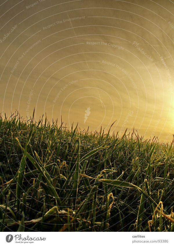 es geht bergab ... vorhersagen Reifezeit Gras Wiese Froschperspektive Morgennebel Weißabgleich Wiedervereinigung Trendwende es geht bergauf