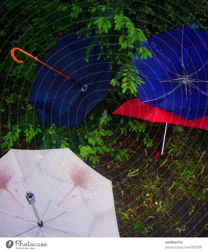 Regen Wald Freizeit & Hobby Schutz Regenschirm obskur Wetterschutz schlechtes Wetter Regenjacke Märchenwald Tiergarten Tiefdruckgebiet Wetterdienst