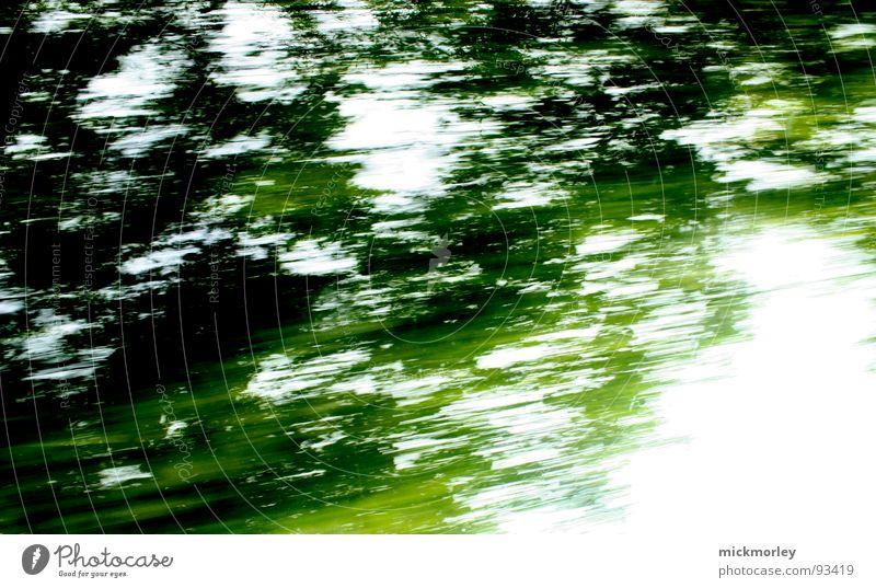 Lichtreise schön Sonne grün gelb Wald Wiese träumen hell Geschwindigkeit trashig harmonisch Rauschen