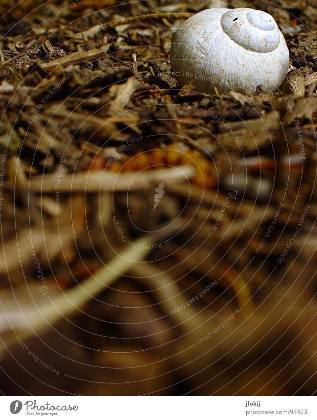 Kräuterbutter Schneckenhaus Weichtier Blatt krabbeln Schleim langsam Spirale Garnspulen Fühler Tentakel weiß Amerika Bodenbelag Erde Ferien & Urlaub & Reisen