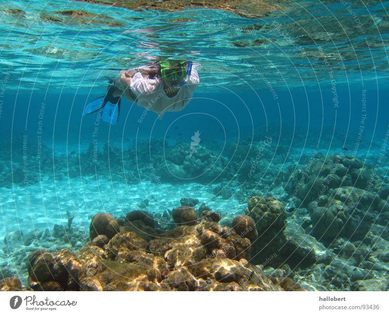Malediven Water 04 Wasser Meer tauchen Riff Schnorcheln Unterwasseraufnahme