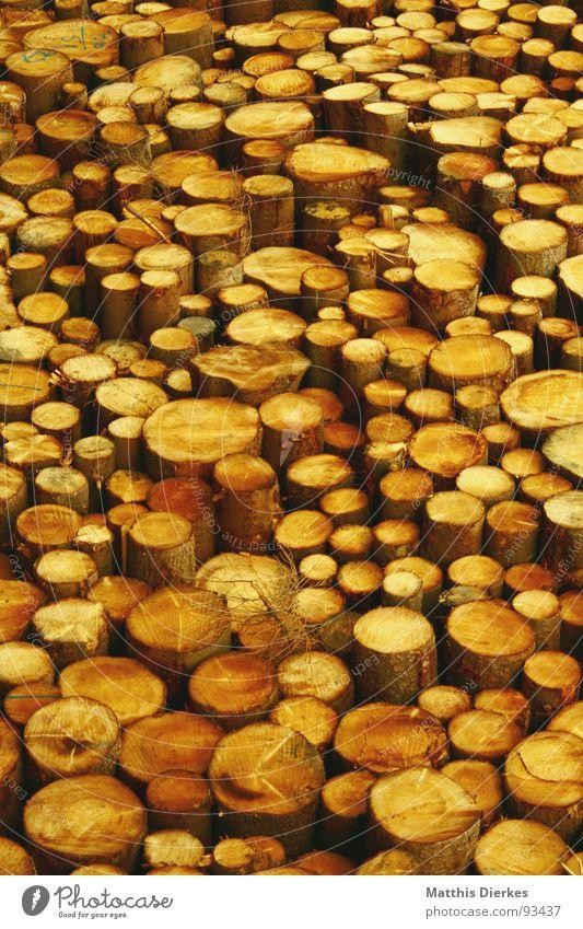 HOLZ Natur Baum Holz gelb Haufen Stapel Holzstapel Baumstamm Abholzung Strukturen & Formen Kontrast Hintergrundbild Baum fällen roh sehr viele holzig Bauholz