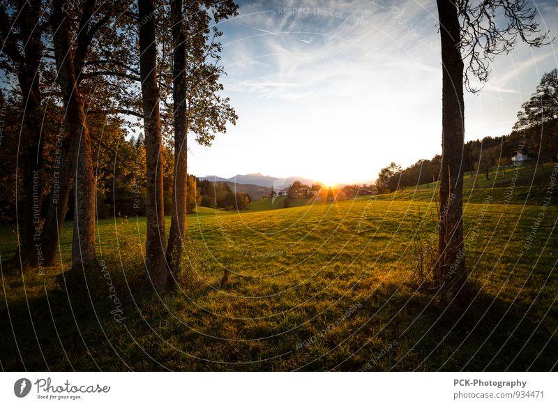 Before sunset Umwelt Natur Landschaft Himmel Sonne Sonnenaufgang Sonnenuntergang Sonnenlicht Herbst Park Wiese Feld Stimmung Sonnenstrahlen Lichtstimmung