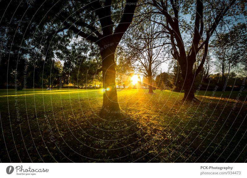 Magic Sunset Landschaft Sonnenaufgang Sonnenuntergang Sonnenlicht Herbst Schönes Wetter Baum Park Wiese Frieden geheimnisvoll Hoffnung ruhig träumen