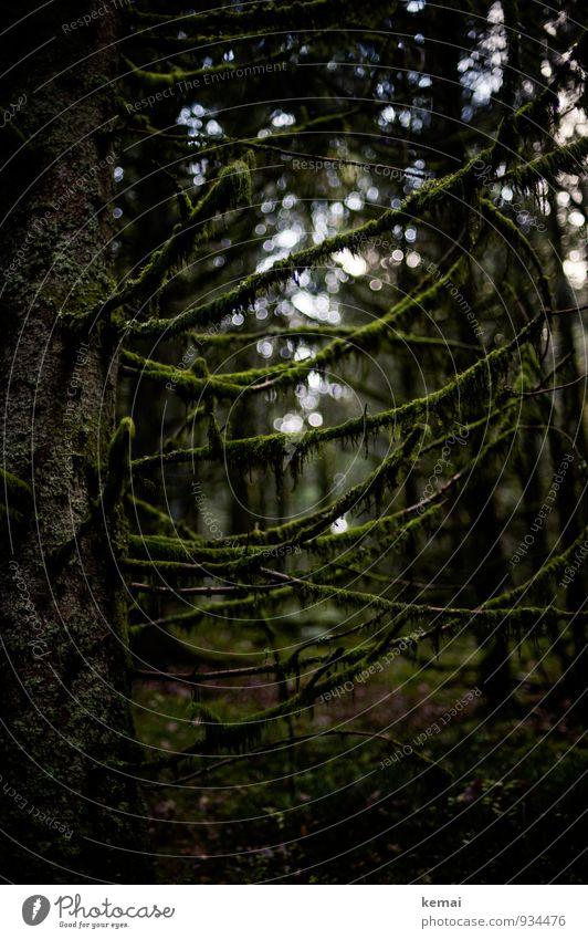Overgrown Natur Pflanze grün Baum Einsamkeit dunkel Wald Umwelt Traurigkeit außergewöhnlich Wachstum Ast Baumstamm Zweig gruselig Moos