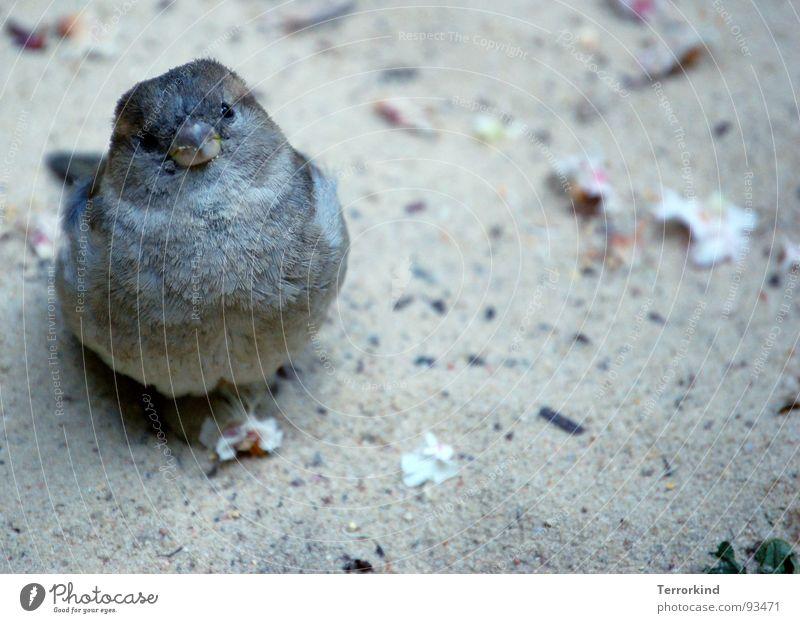 He's shy. but he doesn't show. [I] Vogel klein kurz groß Koloss Zwerg sprechen nah Feder Schmuck Federschmuck mutterlos Spielen Trauer Schüchternheit Gedanke