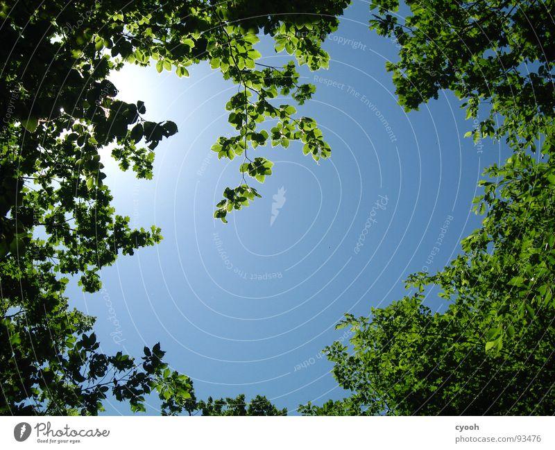 ich glaub ich steh im Wald grün Baum Blatt Sommer ruhig Frühling umzingeln Einblick Aussicht gefangen Erholung Holzmehl Himmel blau entpannen Natur eingekreist