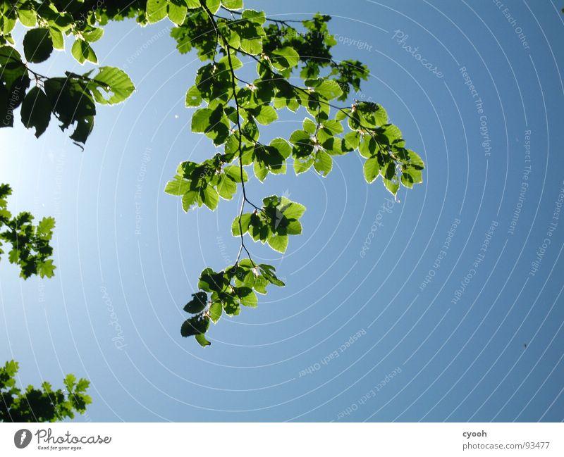 ich glaub ich steh im Wald 2 grün Baum Blatt Sommer ruhig Frühling Himmel blau entpannen Natur