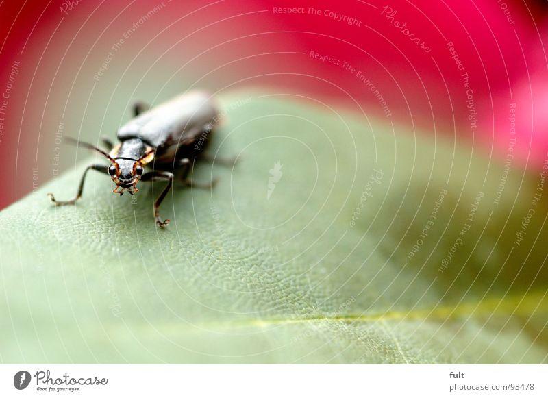 waslos Tier Insekt schwarz Pflanze Makroaufnahme Nahaufnahme Käfer Blick Beine