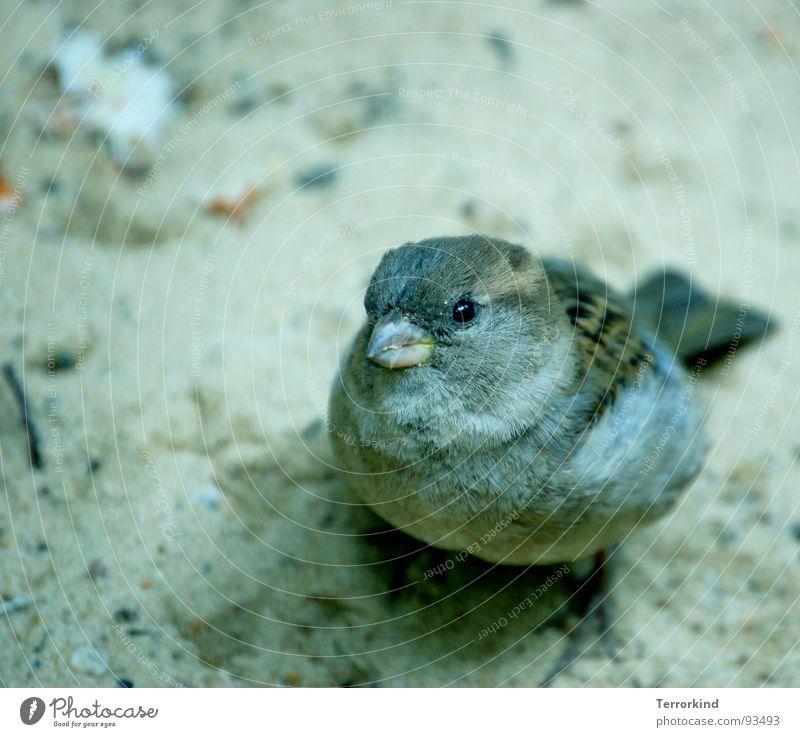 Ich bin der neue. [II] Natur Einsamkeit Auge Traurigkeit Bewegung Spielen Freiheit klein Zeit Sand Vogel fliegen groß frei Feder Trauer