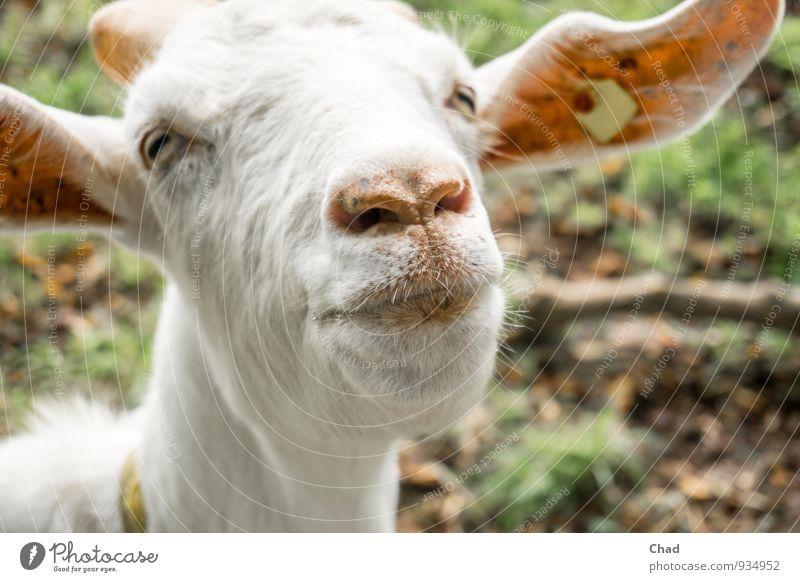 Küss Mich Natur grün weiß Tier Leben Gefühle Lebensmittel rosa Zufriedenheit Ernährung Lächeln niedlich Coolness Neugier Landwirtschaft Fell