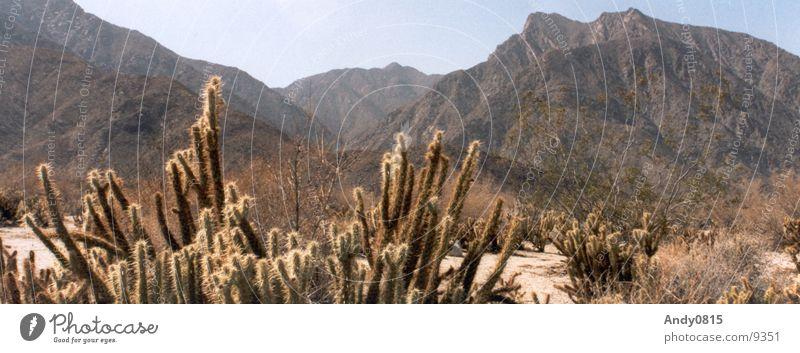 Vally Panorama Wasser Berge u. Gebirge Sand groß Wüste dünn Panorama (Bildformat) Kaktus Tal Kalifornien