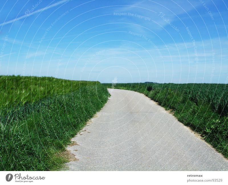 jetzt gehts nach links Feld grün saftig Gerste Asphalt Erholung Fernweh Außenaufnahme Frühling Wiese Fußweg Idylle Horizont Hügel Wegrand abbiegen ruhig