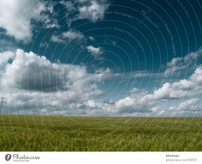 Phase grün türkis Wiese Feld Gras Wolken Wolkenhimmel mehrere Verlauf weich Landschaft Frühling Himmel viele Ferne Freiheit Natur Wohlgefühl baumlos Schatten
