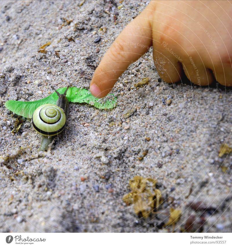 Impression Spielen Freizeit & Hobby Kind Sandkasten Kindheitstraum Aufgabe planen Sommer Frühling Schleimer Fühler Schneckenhaus Einfamilienhaus Hand Kinderhand