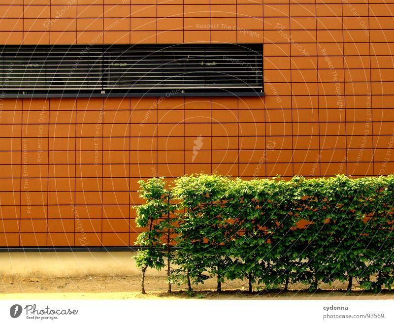 Orange Rechteck Hecke Wand Fenster minimalistisch grün Stadt Stil Architektur modern Detailaufnahme Linie neu orange Ecke Perspektive Maske