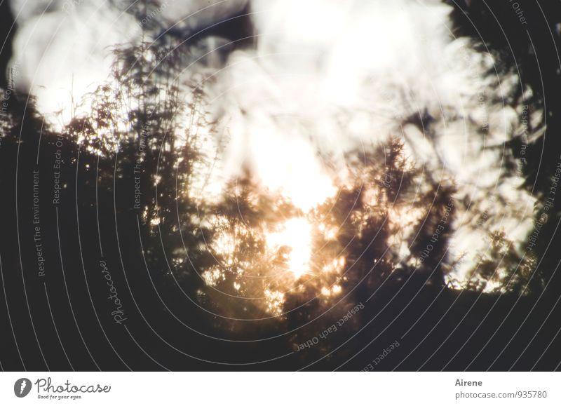 AST7 Pott | Das Wesentliche... Himmel Sonne Herbst Schönes Wetter Sträucher Garten Wald glänzend leuchten außergewöhnlich gold silber weiß einzigartig