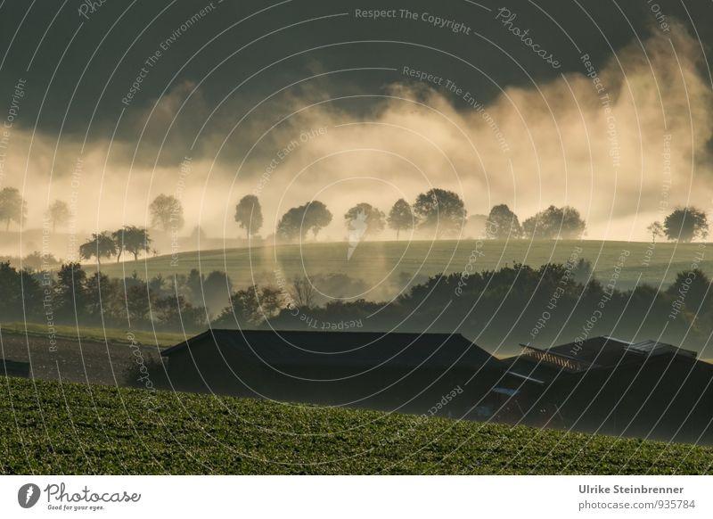 Nebelwallen 3 Umwelt Natur Landschaft Pflanze Erde Luft Wasser Herbst Baum Gras Sträucher Nutzpflanze Feld Wald Haus Bauernhof natürlich grün