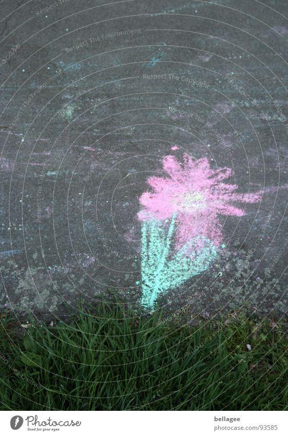 blümchen am wegesrand Blume gemalt Teer Gras Am Rand rosa grün Spielen Kreide Straße Wege & Pfade Kindheit Unschärfe
