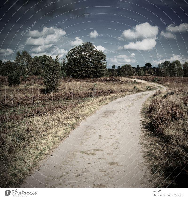 Trockene Gegend Ferien & Urlaub & Reisen Ausflug Ferne Freiheit Umwelt Natur Landschaft Pflanze Himmel Wolken Horizont Herbst Schönes Wetter Baum Sträucher