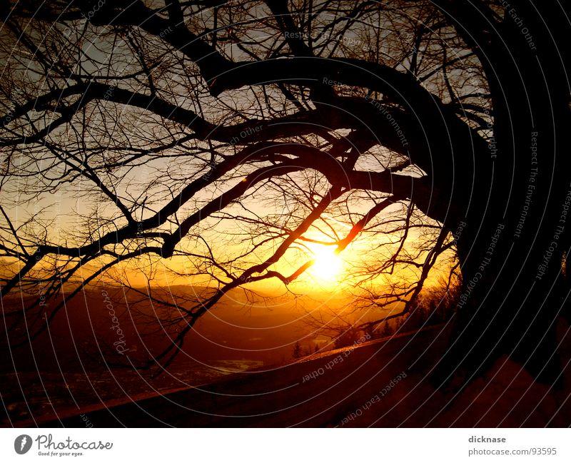 Romance is not Romance Dezember Gegenlicht Sonnenuntergang schwarz Baum alt Hügel Ferne Sehnsucht Silhouette Nebel Abenddämmerung Aussicht rot Winter