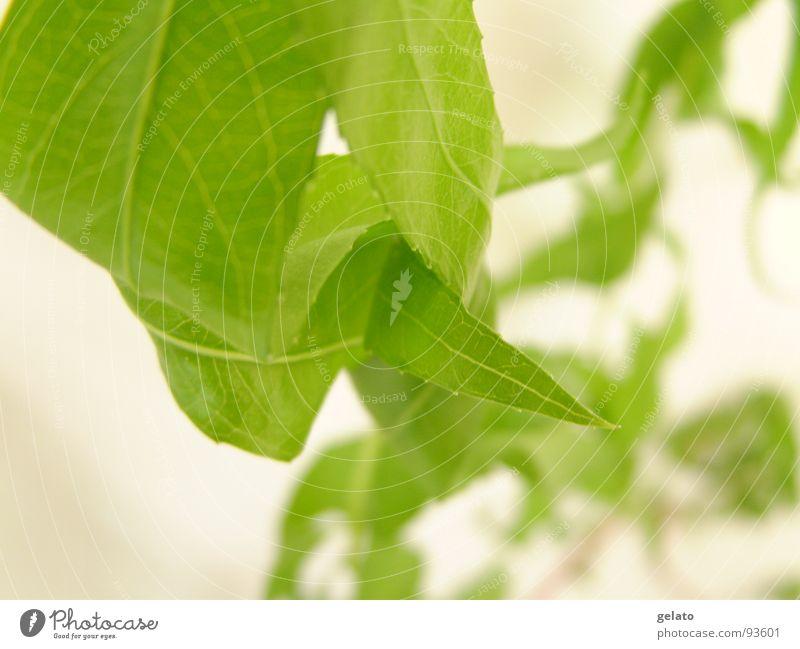 früher Frühling grün Gras Wachstum Park verzweigt Reifezeit verschlingen Wiese Umwelt sommerlich saftig Pflanze Botanik Photosynthese Urwald Licht Vase frisch