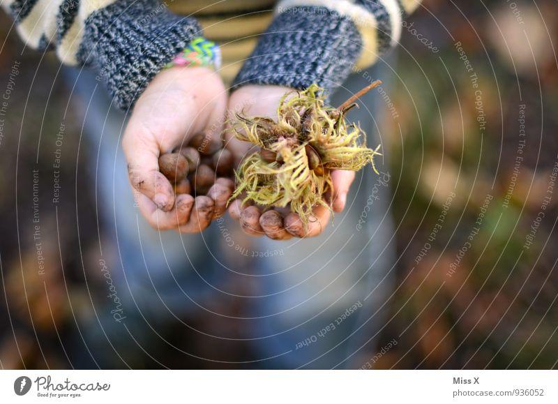 Sammler Mensch Kind Hand Wald Herbst Junge Spielen Lebensmittel Freizeit & Hobby dreckig Frucht Kindheit Ernährung Finger viele Bioprodukte