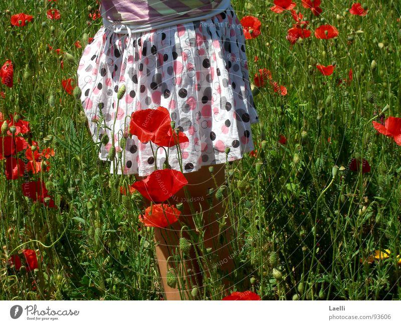 Mohnröckchen weiß rosa schwarz rot Blüte schön Blühend Gras grün saftig Feld Fröhlichkeit Frühling Blume Freude Garten Natur