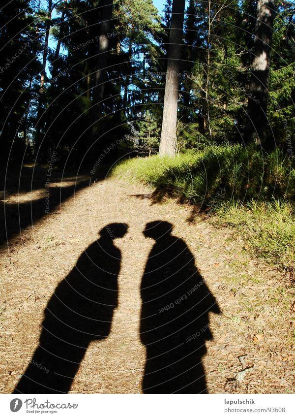 waldgefluester Wald Estland grün Fichte Physik geheimnisvoll Außenaufnahme Liebe Frühling frueling Paar maenschen Schatten disskussion Wärme Natur